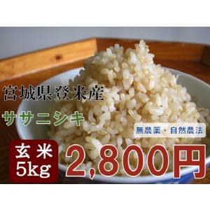 新米 30年産 ササニシキ 5kg 玄米  宮城 登米 特別栽培米 米 農薬・化学肥料不使用|tomerice