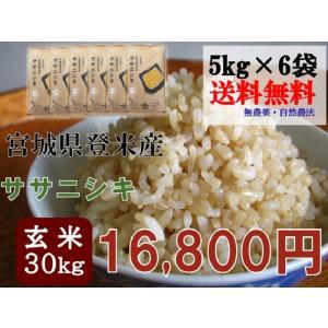 新米 30年産 ササニシキ 30kg (5kg×6袋) 玄米 送料無料   宮城 登米 米 特別栽培米 農薬・化学肥料不使用|tomerice