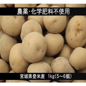 じゃがいも 1kg 5〜6個 農薬・化学肥料不使用 キタアカリ|tomerice