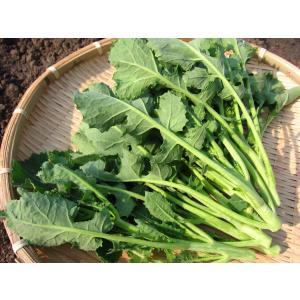 つぼみ菜 (1束:150g) 農薬・化学肥料不使用|tomerice