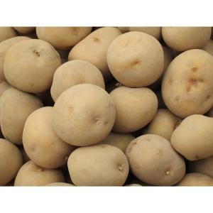 小じゃが (1kg) 農薬・化学肥料不使用 キタアカリ|tomerice