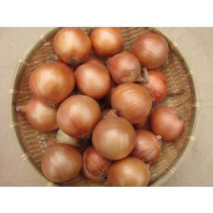 小玉ねぎ (1kg) 農薬・化学肥料不使用 tomerice