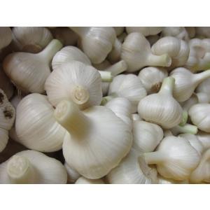 徳用 にんにく (500g:6〜8玉) 農薬・化学肥料不使用 サイズ混合 tomerice