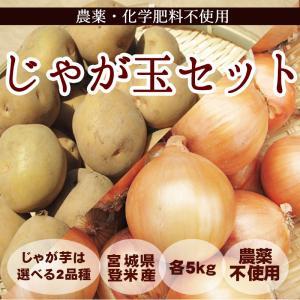 じゃが玉セット (10kg) じゃがいも玉ねぎ各5kg 農薬・化学肥料不使用|tomerice