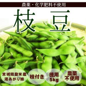 徳用 枝付き 枝豆 5kg 農薬・化学肥料不使用 湯上がり娘 冷凍OK tomerice