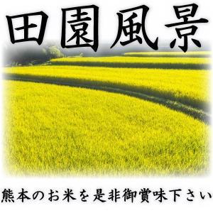 当店人気1番 精白米 新米 30年産 九州 熊本県産 ヒノヒカリ 10kg ひのひかり 白米 くまもとのお米 tomitasyoten 05