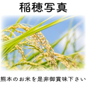 精白米 一等米使用 新米 30年産 九州 熊本県産 ヒノヒカリ 5kg ひのひかり 白米 くまもとのお米|tomitasyoten|04