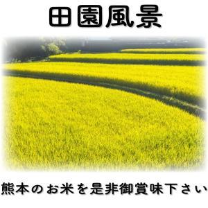 精白米 一等米使用 新米 30年産 九州 熊本県産 ヒノヒカリ 5kg ひのひかり 白米 くまもとのお米|tomitasyoten|05