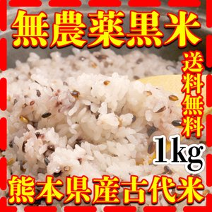 古代米として有名な黒米無農薬 九州熊本県産の黒米を当店で販売 栄養豊富  注意 大量売りについてはで...