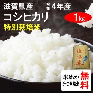 平成28年産 滋賀県東近江市山上町産 特別栽培米コシヒカリ(1等玄米) 1kg|tomoda