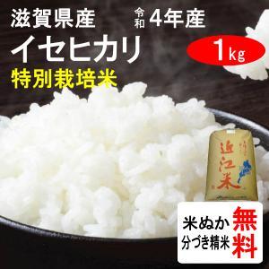 平成29年産 滋賀県近江八幡市産 特別栽培米イセヒカリ(1等玄米) 1kg|tomoda