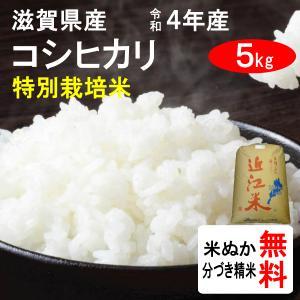 平成28年産 滋賀県東近江市山上町産 特別栽培米コシヒカリ(1等玄米) 5kg|tomoda