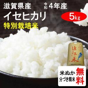 平成29年産 滋賀県近江八幡市産 特別栽培米イセヒカリ(1等玄米) 5kg|tomoda