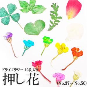 【37-50・164】ケース入り 押し花(ドライフラワー)10枚入り tora-shop