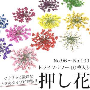 押し花 ドライフラワー (96-109) 10枚入り 大きめサイズ tora-shop