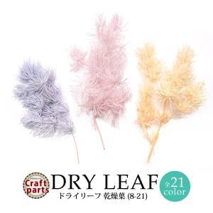 ドライリーフ 乾燥葉 各種 2~3本前後入り(8-21)