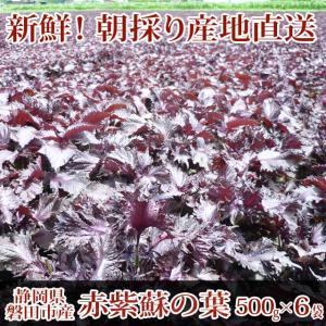 赤紫蘇 3kg(500g×6袋)葉のみ☆朝採り赤しそ産地直送☆梅干し作りに、赤シソジュースに!!