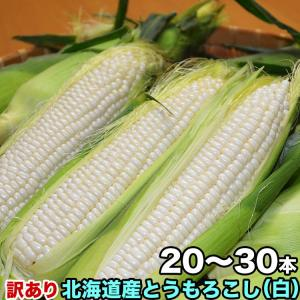 とうもろこし トウモロコシ 北海道産 訳ありホワイトコーン1...