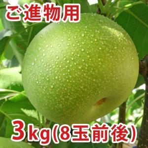 二十世紀梨(20世紀梨)3kg詰(8玉前後入/2L〜3Lサイズ) 鳥取県産 赤秀(ご贈答用) 送料無料|toretatehonpo|04
