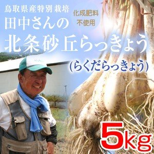 鳥取県産特別栽培 田中さんの北条砂丘らっきょう5kg(根付き土付き らくだらっきょう) 送料無料(北海道・沖縄を除く)|toretatehonpo