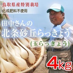 鳥取県産特別栽培 田中さんの北条砂丘らっきょう4kg(根付き土付き 玉らっきょう) 送料無料(北海道・沖縄を除く)|toretatehonpo