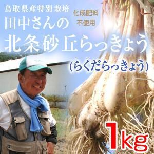 鳥取県産特別栽培 田中さんの北条砂丘らっきょう1kg(根付き土付き らくだらっきょう) 送料無料(北海道・沖縄を除く)|toretatehonpo