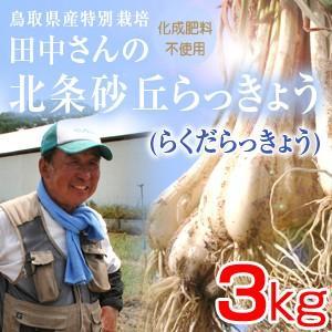 鳥取県産特別栽培 田中さんの北条砂丘らっきょう3kg(根付き土付き らくだらっきょう 国産) 送料無料(北海道・沖縄を除く)|toretatehonpo