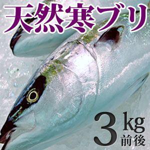 天然ブリ(寒鰤/寒ブリ)3kg前後 送料無料(北海道・沖縄を除く)|toretatehonpo
