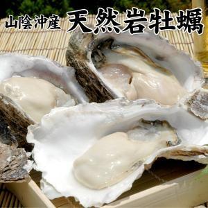 山陰沖産 天然岩牡蠣1kgセット(5個前後入) 送料無料(北海道・沖縄を除く)|toretatehonpo