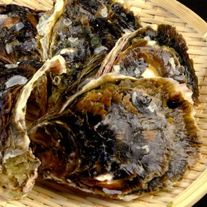 島根県隠岐産 岩牡蠣1kgセット(5個前後入)|toretatehonpo|06