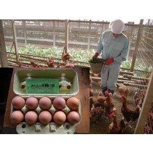 平飼いもみじ卵 自然卵 30個入りの詳細画像2