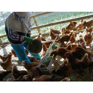 平飼いもみじ卵 自然卵 30個入りの詳細画像3