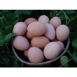 大寒のたまご 平飼いもみじ卵 自然卵 30個入り