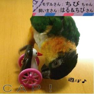 色が選べる♪ ゴーゴーペンギン|torimura|02