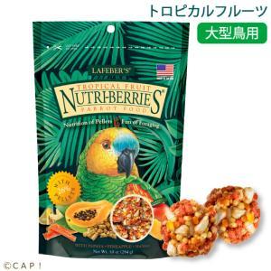 賞味期限:2020/8/4ラフィーバー トロピカルフルーツパロット(10oz/284g)|torimura