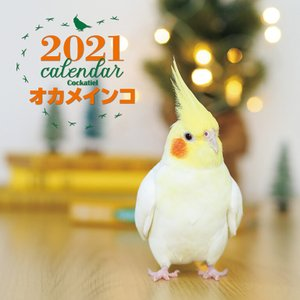 誠文堂新光社 2021年大判カレンダー オカメインコ|torimura