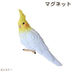 【CANAL】マグネット オカメインコ|torimura