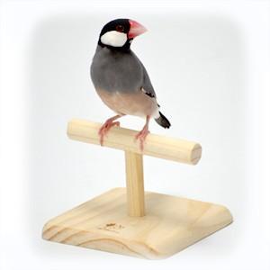 CAP! 鳥の止まり木 SANKO 小鳥のT型ローパーチ|torimura