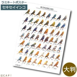 ラミネートポスター【大判】セキセイインコ*同梱不可*送料個別発生*|torimura