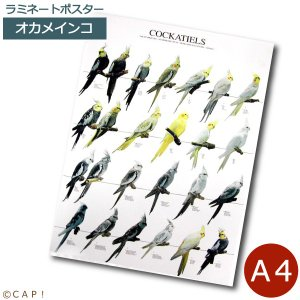 ラミネートポスター【A4サイズ】オカメインコ torimura