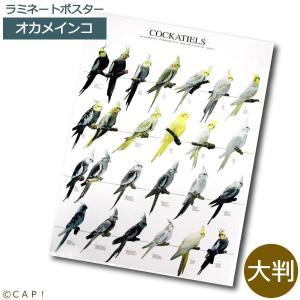 ラミネートポスター【大判】オカメインコ*同梱不可*送料個別発生*|torimura