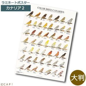 ラミネートポスター【大判】カナリア2*同梱不可*送料個別発生*|torimura