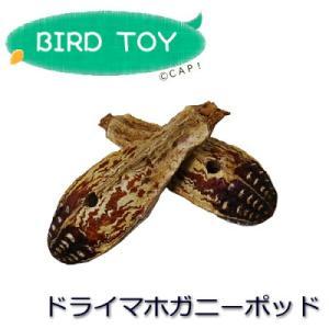MISC ドライマホガニーポッド|torimura