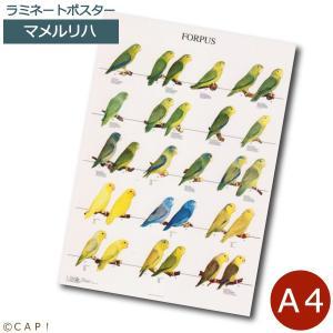ラミネートポスター【A4サイズ】マメルリハ torimura