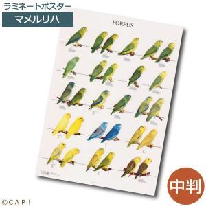 ラミネートポスター(中判) マメルリハ*同梱不可*送料個別発生*|torimura