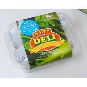 【ハッピーホリディジャパン】 ミニペットサラダ栽培セットチンゲン菜 ※ミニ青※|torimura