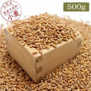 【国産】小麦 500g|torimura