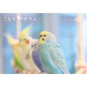 【ことりカフェ】メモ帳ことりカフェ表参道のことりたち torimura