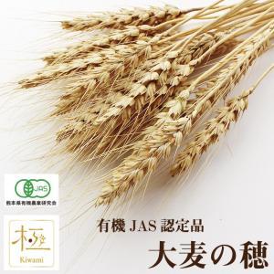 CAP! 鳥の餌 熊本県産 有機JAS認定品 大麦の穂 50g 2020年産|torimura