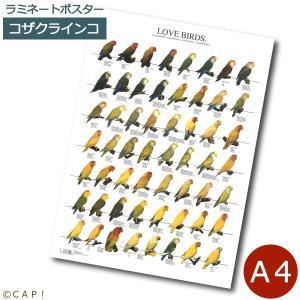 ラミネートポスター【A4サイズ】ラブバード1 コザクラインコ|torimura